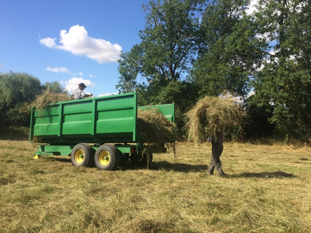 Loading trailer with green hay at East Lound with Matt Cox Lincs Wildlife Trust