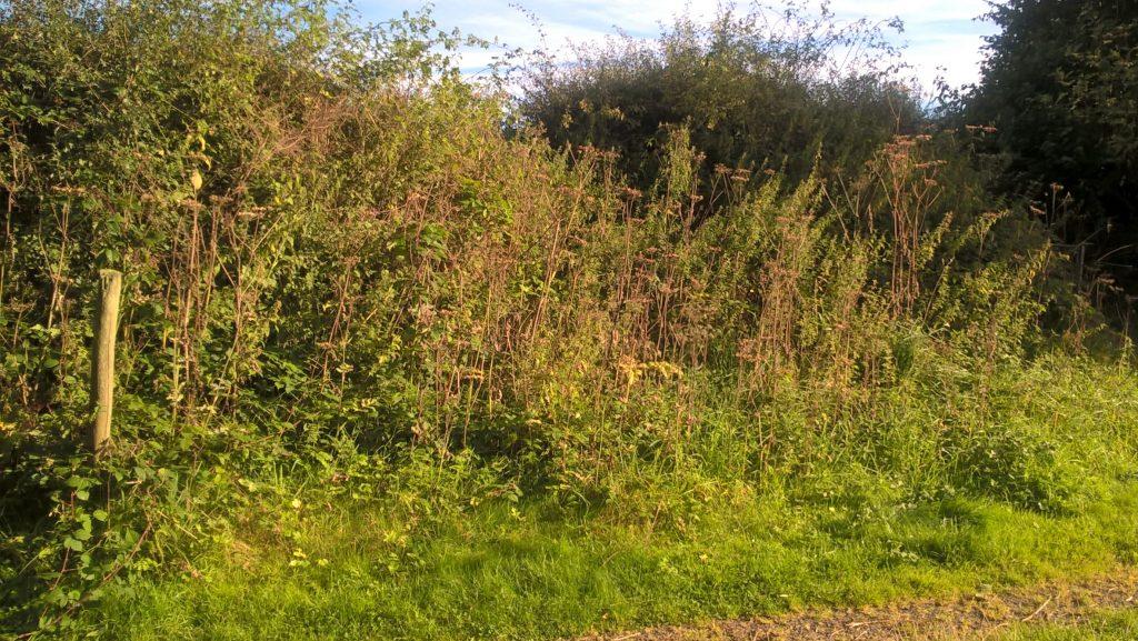 long vegetation