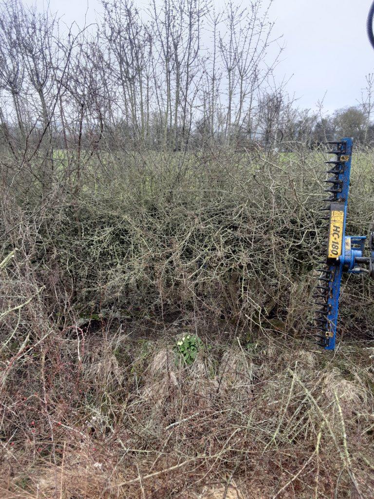 Bar hedge trimmer cuts through 3 - 4 yr old hedge wood