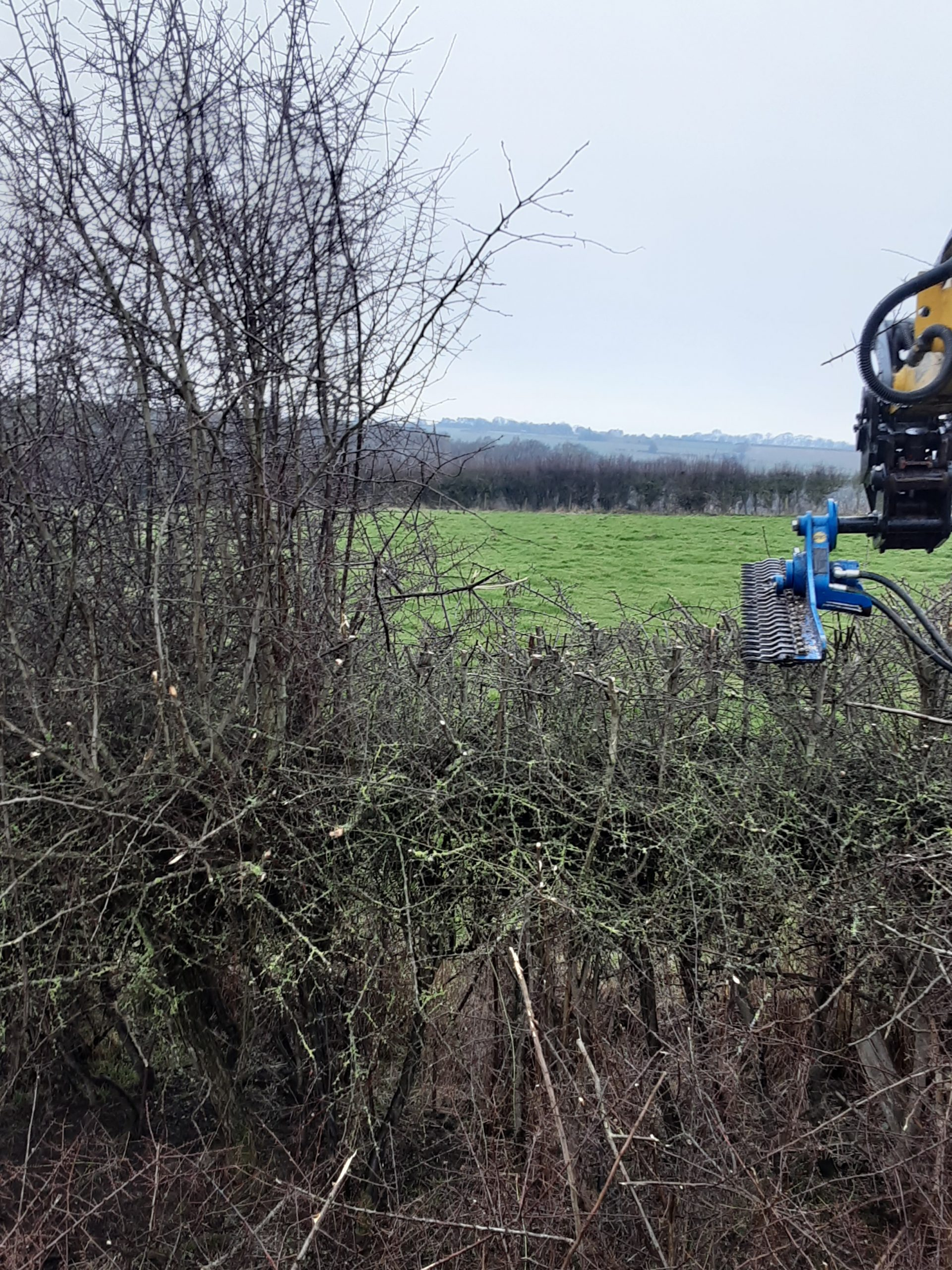 Cutting several feet of mature hedge growth in one cut
