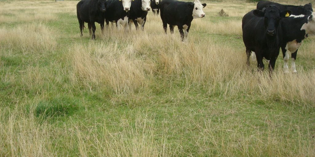Enhancing improved grassland - Gethin Davies