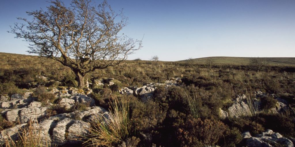 Aghatirourke RSPB reserve, Cuilcagh Mtn, Co, Fermanagh,  September 2002