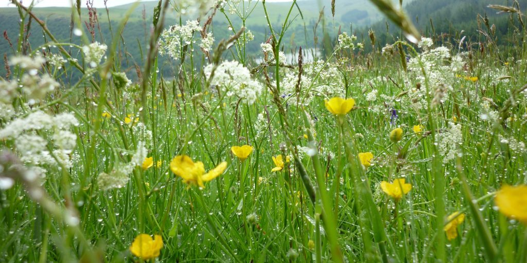 Upland hay meadow Cath Shellswell (Plantlife)