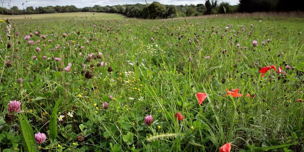 arable reversion - chalk downland
