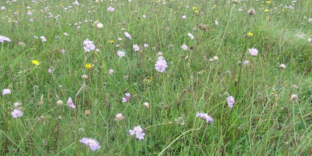 arable reversion to chalk grassland R Winspear