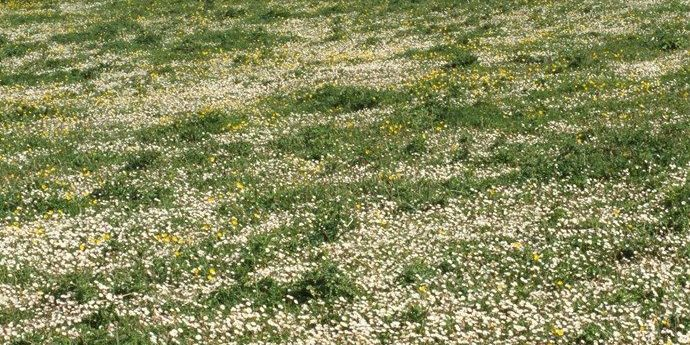 machair at Balranald
