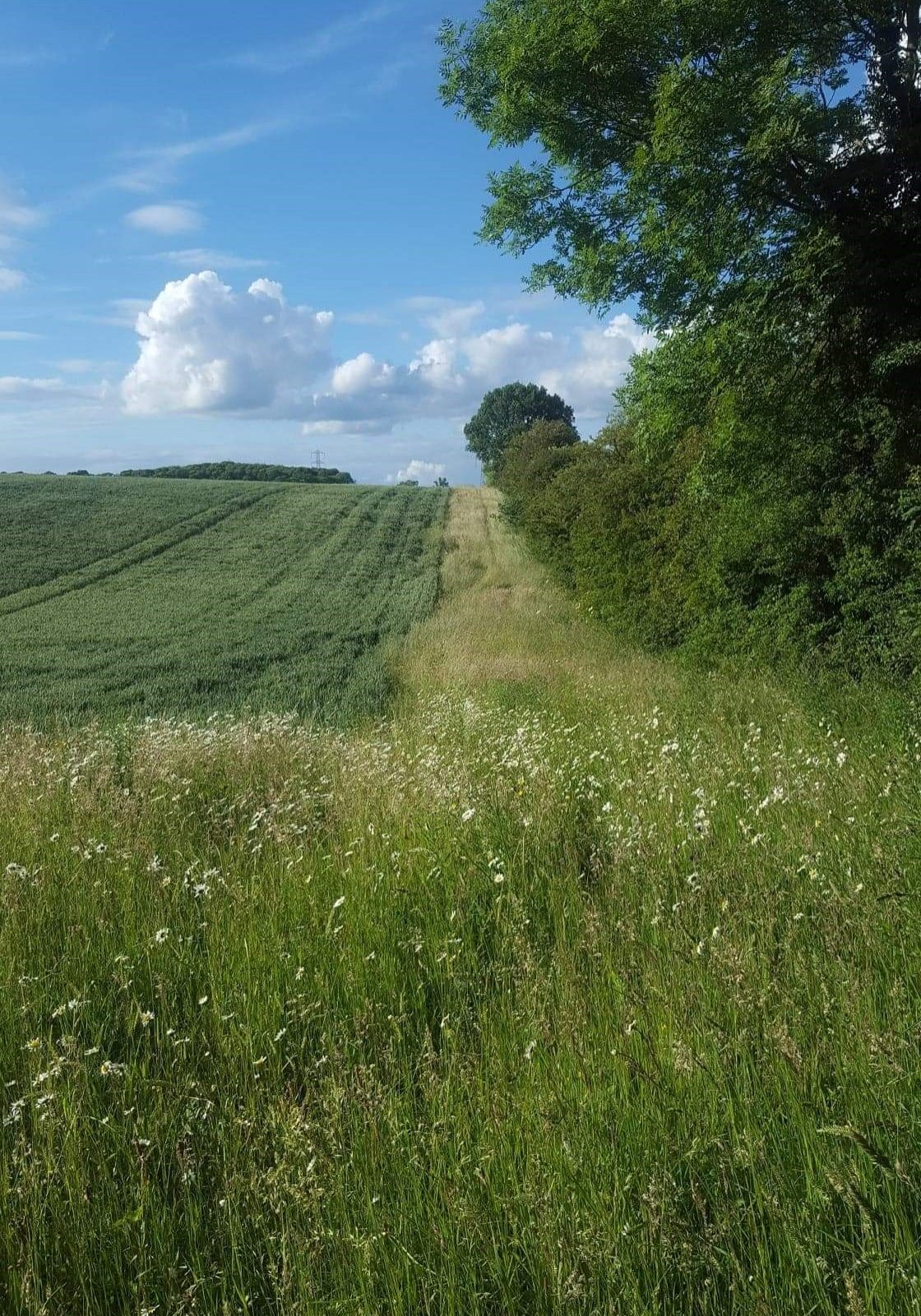 Farm habitats for beetles. a) grass and flower margins, along with hedges provide food resources year round, and connect other habitats;